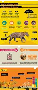 Key facts about jaguars
